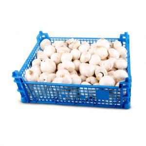 caixa 2kg cogumelos