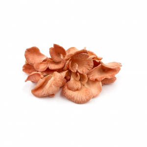 cogumelo-fresco-ostra-rosa