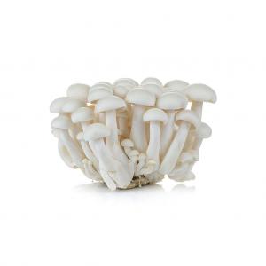 cogumelo-fresco-shimeji-branco
