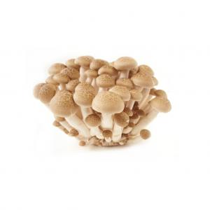 cogumelo-fresco-shimeji-castanho